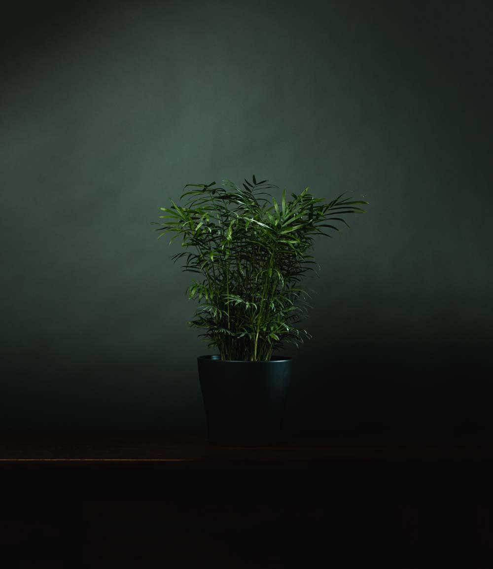 plants for windowless office. 151104_modernplants_133_widened plants for windowless office h