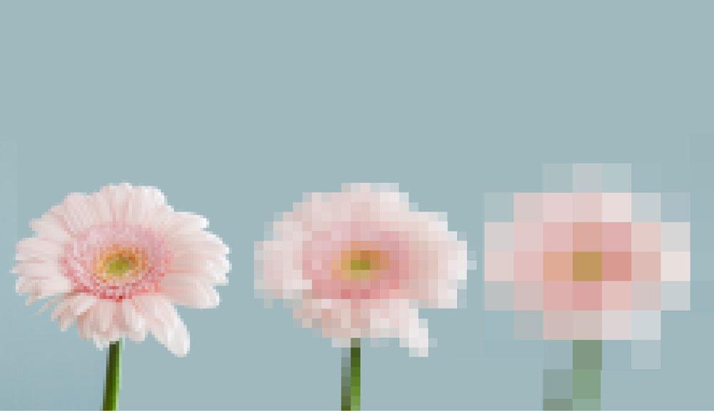 DIB2017_1800x1200_just-flowers